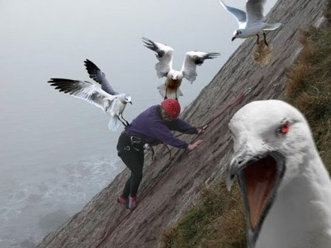 killer-seagulls-UK.jpg
